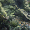 Xem tranh rừng rậm tìm ra đâu là điểm mạnh khiến bạn thành công trong tương lai?