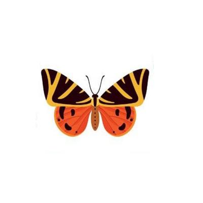 2. Con bướm số 2