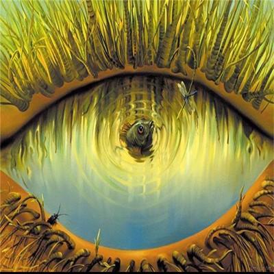 Con mắt